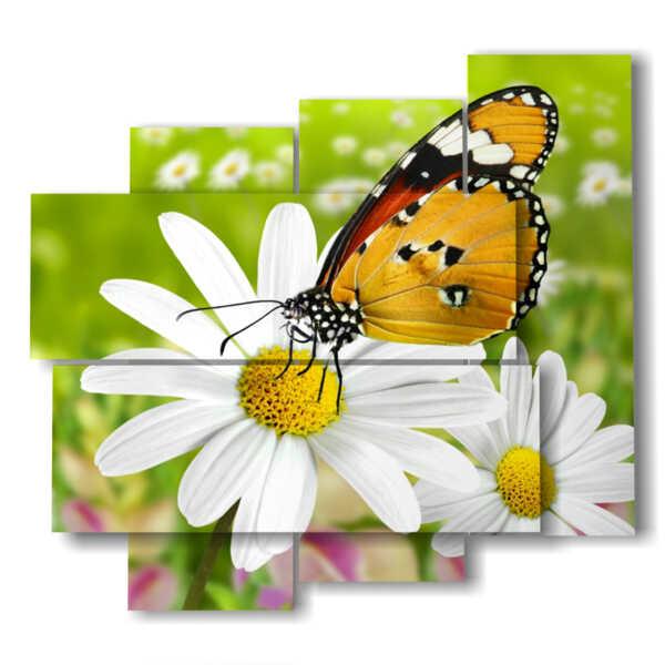Mariposas en imágenes de las margaritas