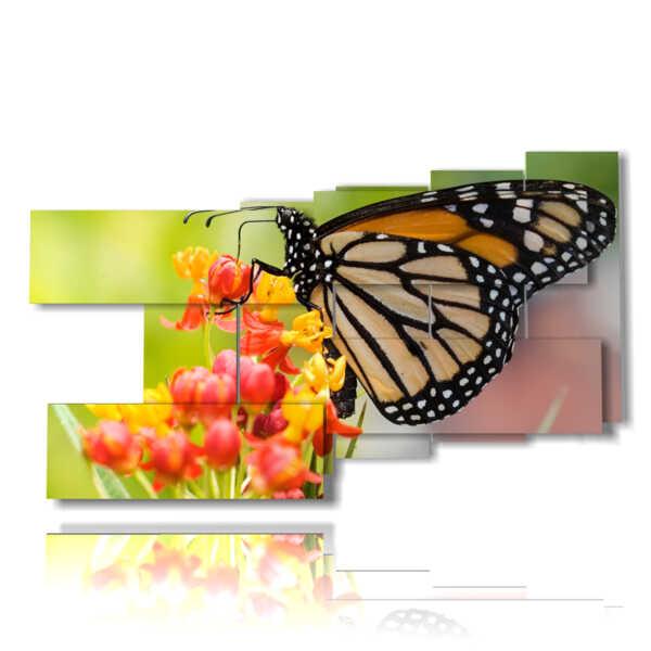 cuadros con mariposas reales sobre flores de colores