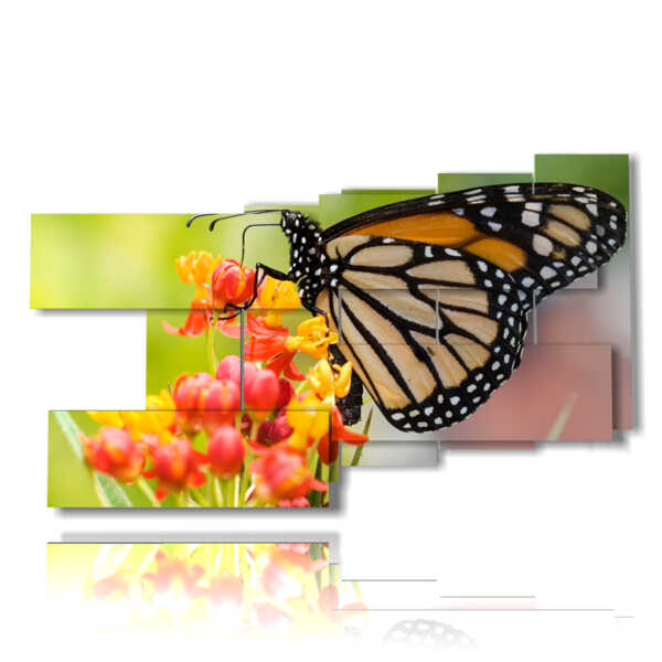 tableaux avec de véritables papillons sur les fleurs colorées