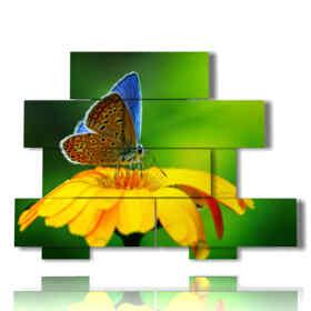 quadri fiori farfalle nel sole