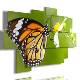 image des papillons