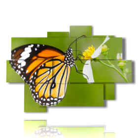 quadro delle farfalle sul fiore