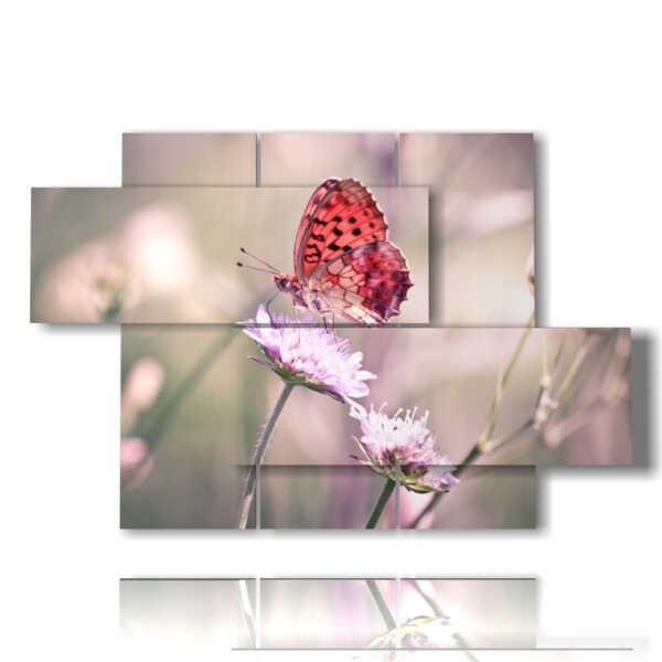mariposas imágenes reales