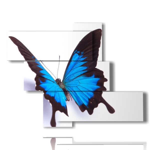 paintings butterflies in relief