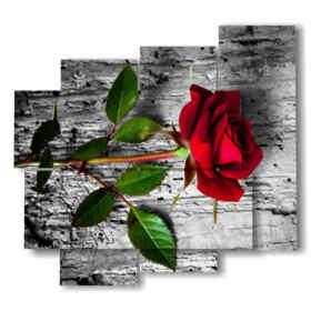 Bilder Bilder rote Rosen