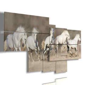 Bilder auf weißen Pferden