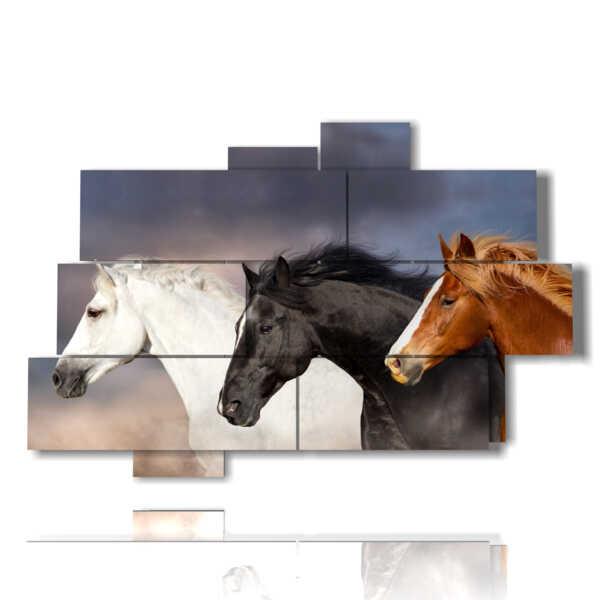 image de chevaux que vous choisissez votre favori