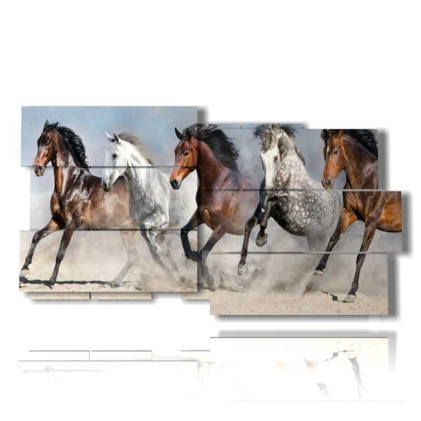 quadri cavalli arabi pronti alla partenza
