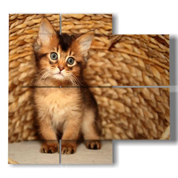 quadro gatto nel cesto