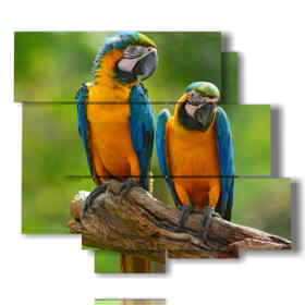 colored parrots paintings