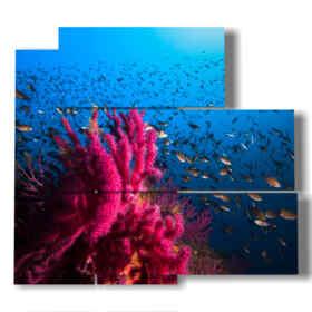 quadro Pesci nel Mediterraneo