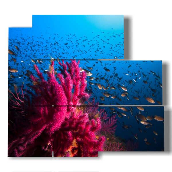 cuadros con imágenes de peces en el Mediterráneo
