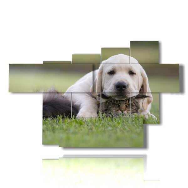 cuadros de perros y gatos que juegan en un prado