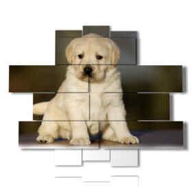 Tableaux modernes avec chien chiot