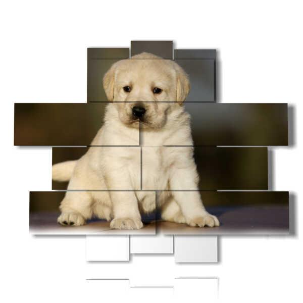 tableaux avec chien chiot