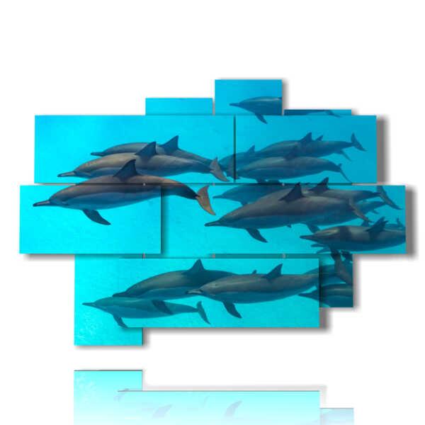 quadro con stampa delfini