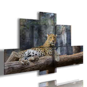 Bilder von afrikanischen Tieren mit Leopard