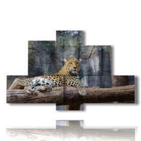 quadri di animali africani con il leopardo