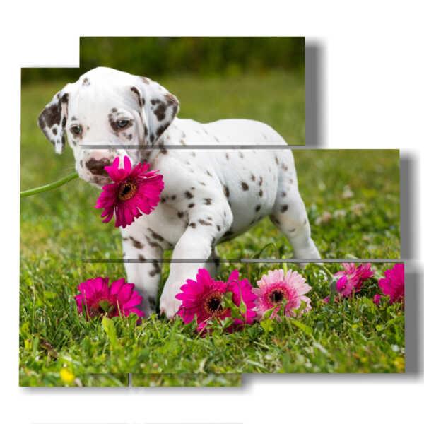 tableaux de chien doux avec des fleurs