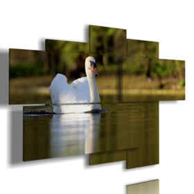 paintings prints the white swan animals