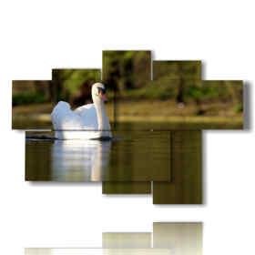 quadri stampe animali di cigno bianco
