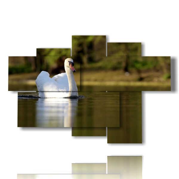 cuadros imprime los animales blanco cisne