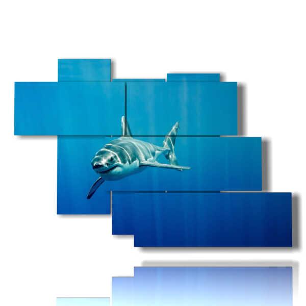 tableaux avec des tableaux requin à venir