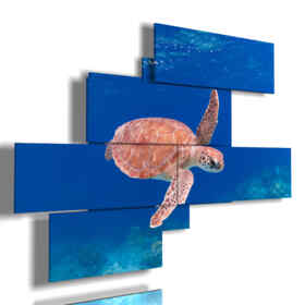 abstract fish with sea turtle pictures