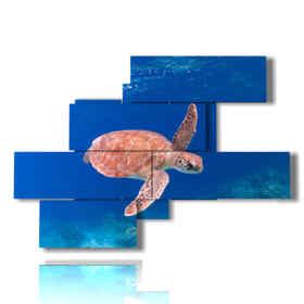 quadri astratti pesci con tartaruga marina