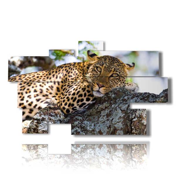 quadri animali savana in riposo