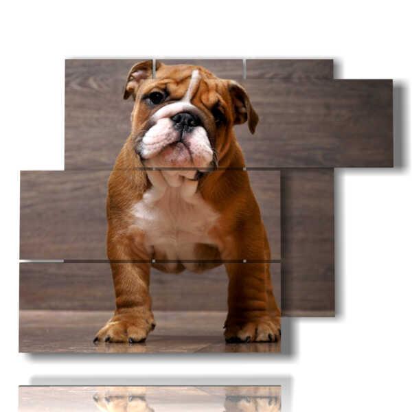 niedliches Hund Bild