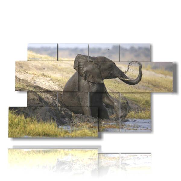 tableaux avec éléphant assis