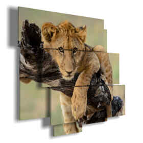 pictures with lion hugging the branch