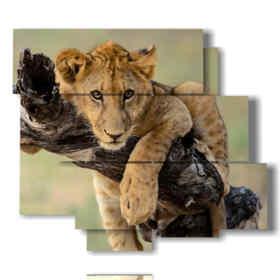 quadri con leone abbracciato al ramo