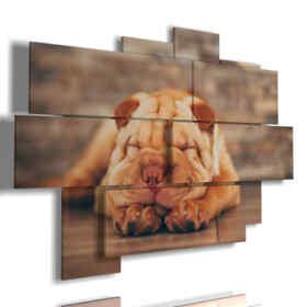 Panel con el perro pintado mientras duerme