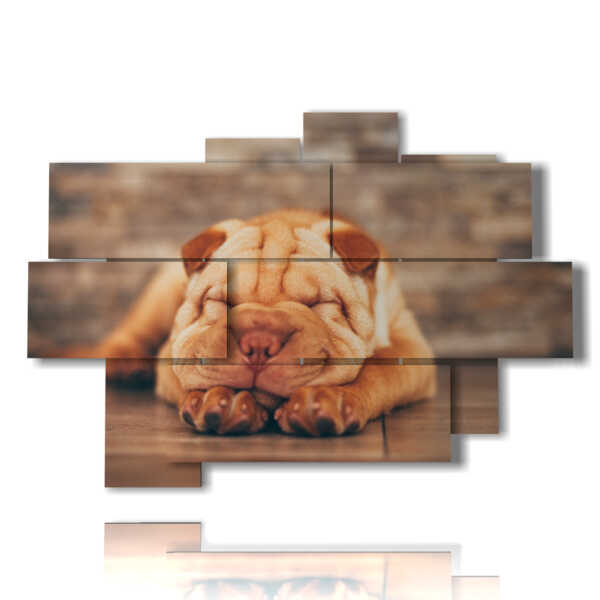 panneau avec le chien peint pendant qu'il dort