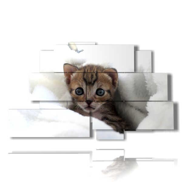 gatos gatitos fotos