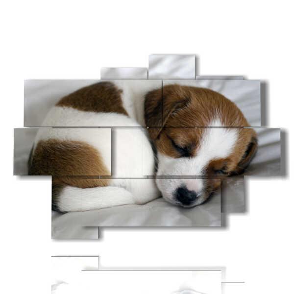 quadro con dipinti cani cuccioli mentre dormono