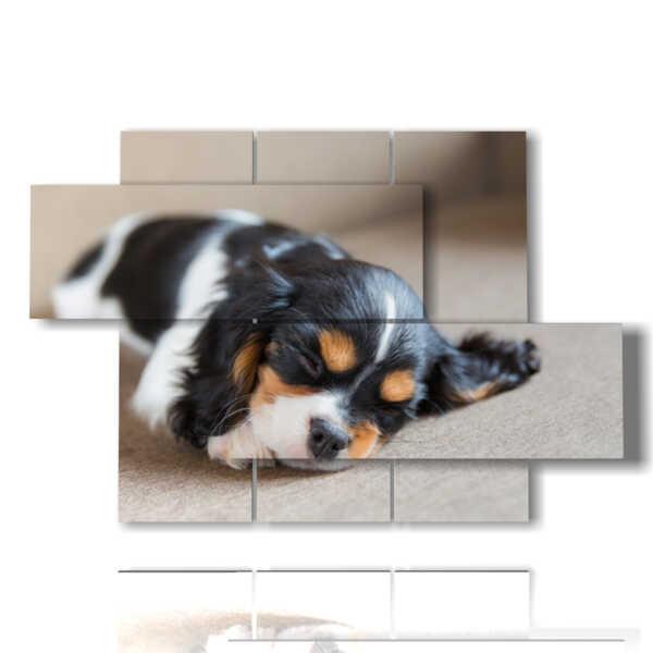 quadro zampa cane piccolino mentre dorme