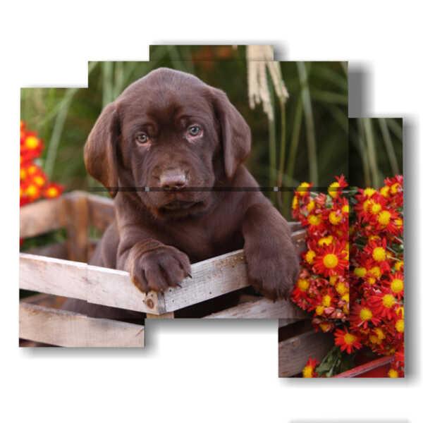 quadro di cane in un cesto di fiori