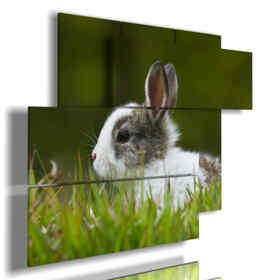 tableaux animaux pour les enfants lapin