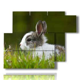quadri animali per bambini con coniglietto