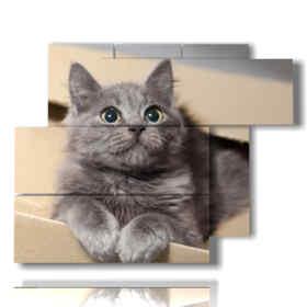 chats dans les tableaux dans une boîte