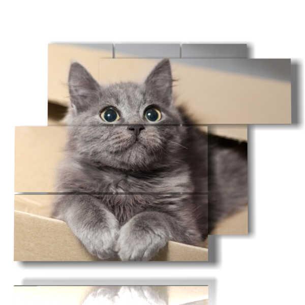 gatos en las cuadros en una caja