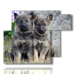 Images modernes de chiots de chien