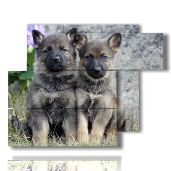 photos de chiens chiots