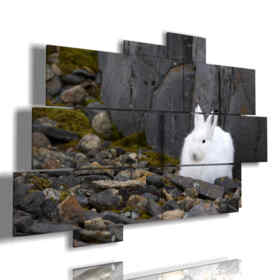 lapin blanc, tableaux animaux
