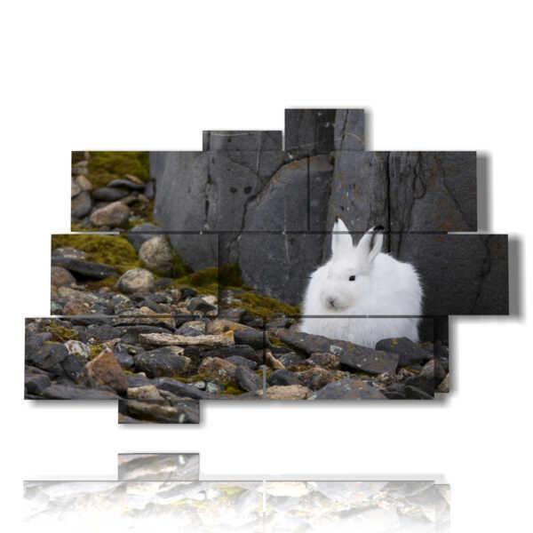 immagini quadri animali coniglietto bianco