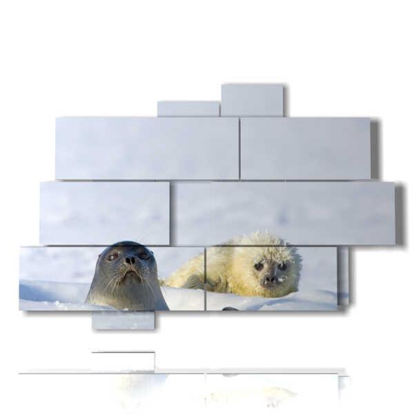animali nei quadri con foche