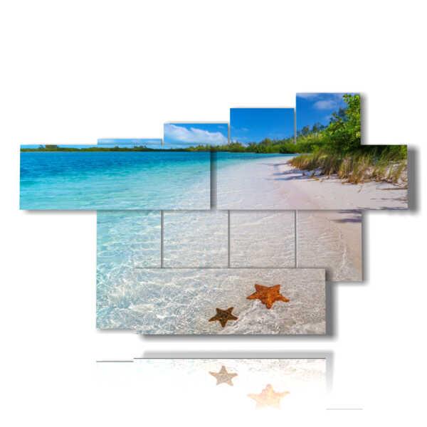 cuadros playa de la isla del Caribe con estrellas de mar